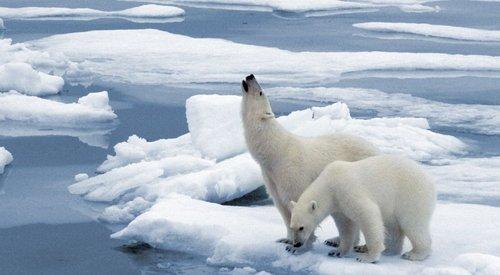 北极气候因为气温升高发生巨大变化 造成的影响很大