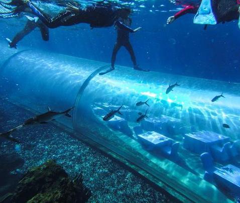 游客在三亚潜水时候意外溺亡,公司非法经营被刑事拘留